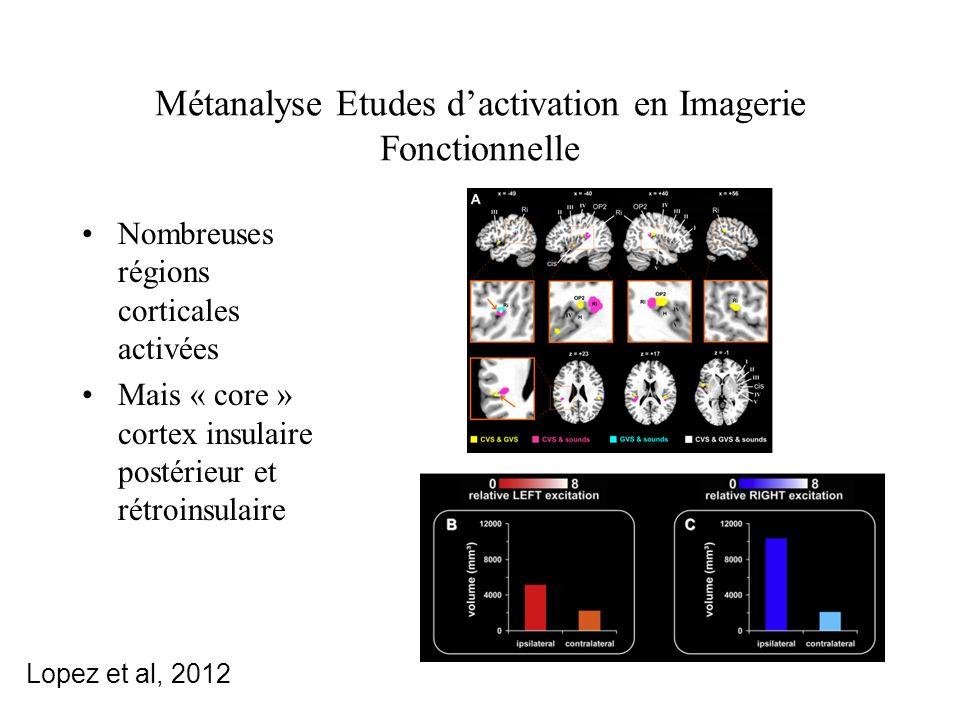 Métanalyse Etudes d'activation en Imagerie Fonctionnelle