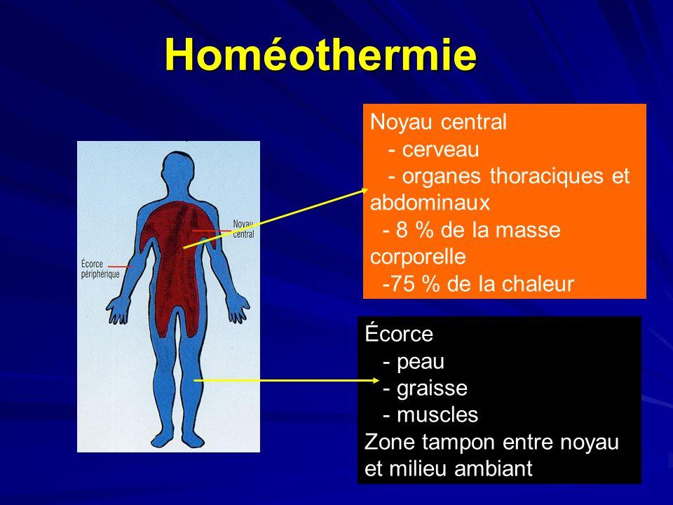 Homéothermie Noyau central - cerveau