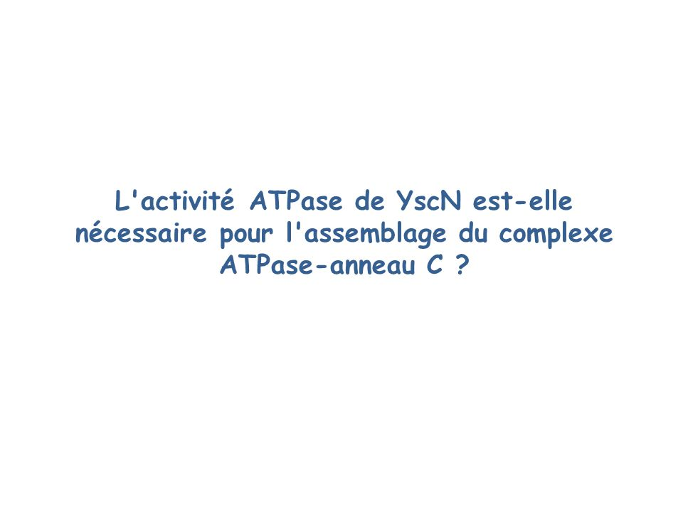 L activité ATPase de YscN est-elle nécessaire pour l assemblage du complexe ATPase-anneau C