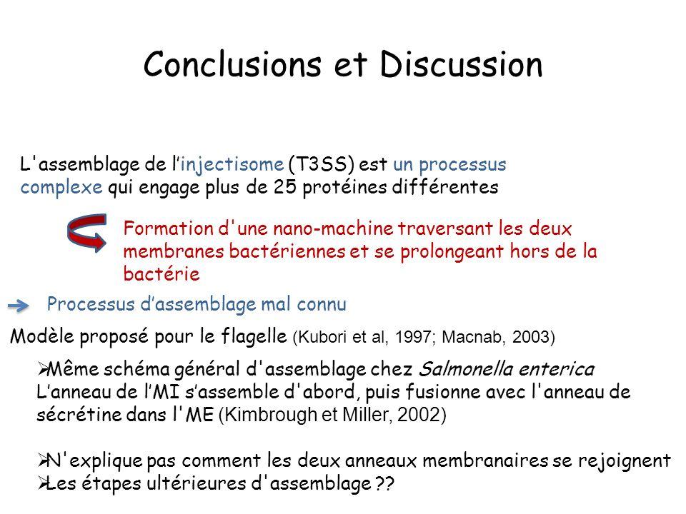 Conclusions et Discussion