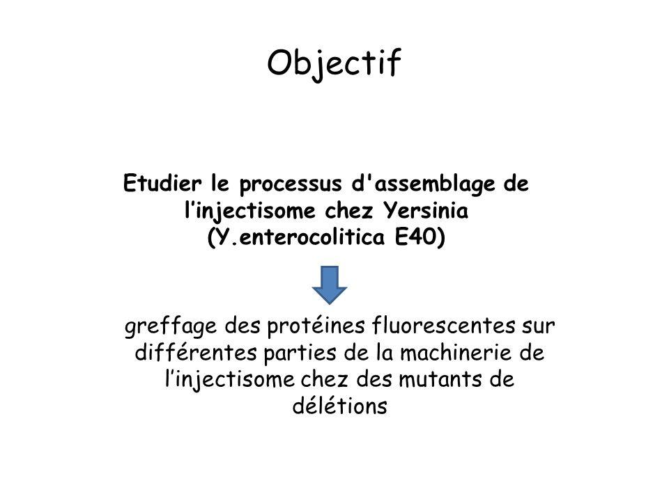 greffage des protéines fluorescentes sur