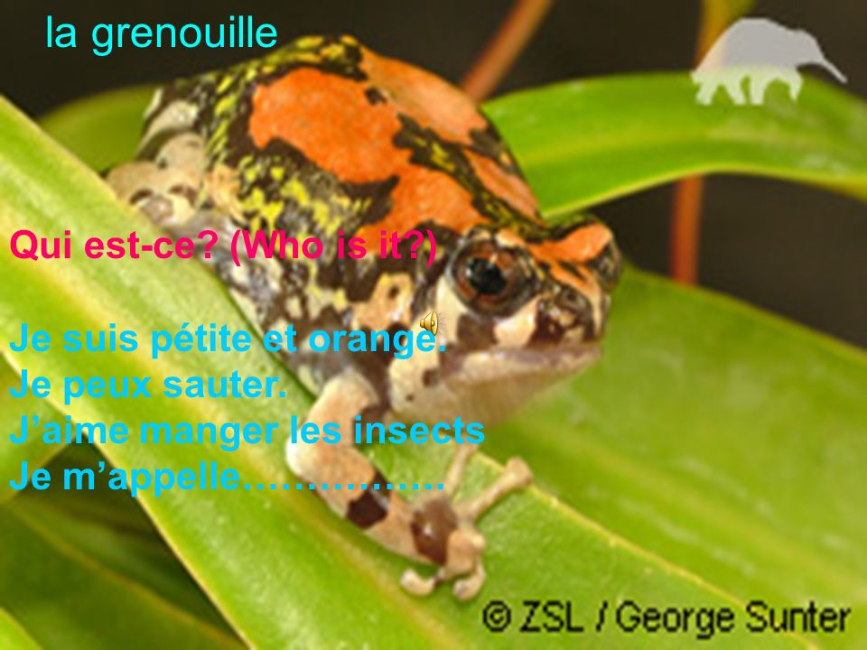 la grenouille Qui est-ce (Who is it ) Je suis pétite et orange.