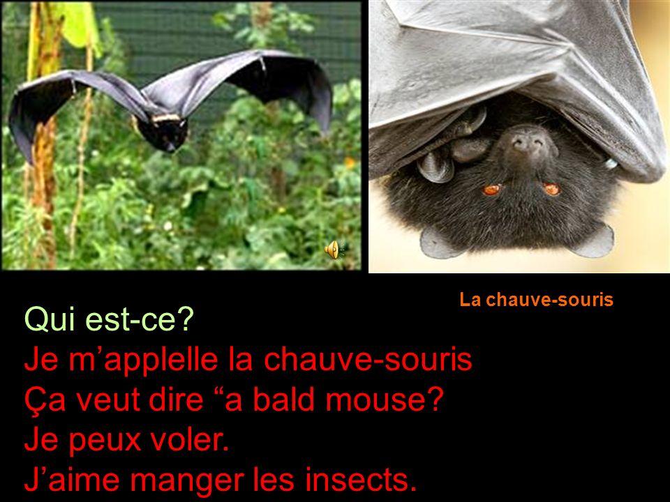 Je m'applelle la chauve-souris Ça veut dire a bald mouse