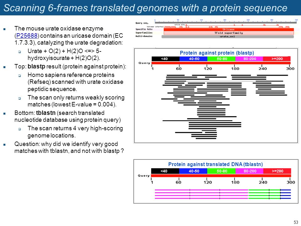 Scanning 6-frames translated genomes with a protein sequence