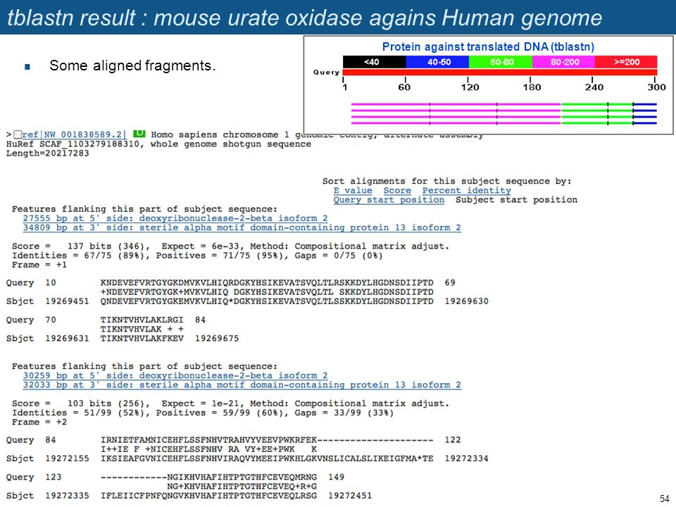 tblastn result : mouse urate oxidase agains Human genome