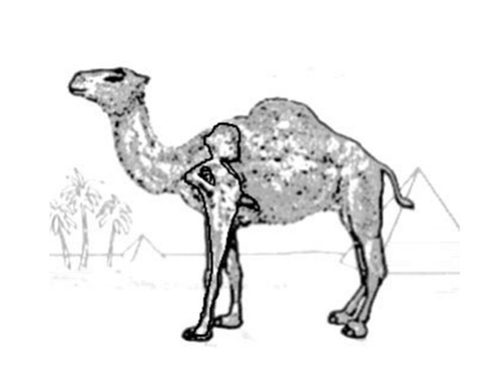 An oldie but a goodie: Who hasn t spent time searching the Camel logo for the image of a naked man with his cigarette hanging out
