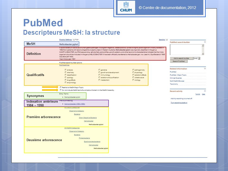 PubMed Descripteurs MeSH: la structure