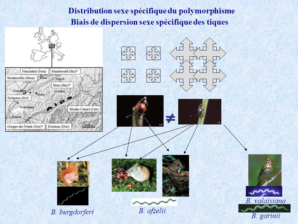  Distribution sexe spécifique du polymorphisme