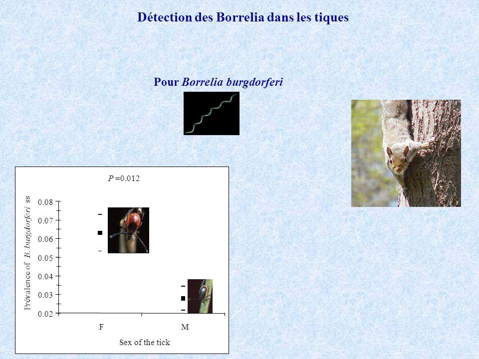 Détection des Borrelia dans les tiques