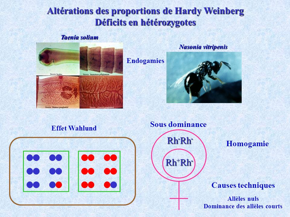 Altérations des proportions de Hardy Weinberg