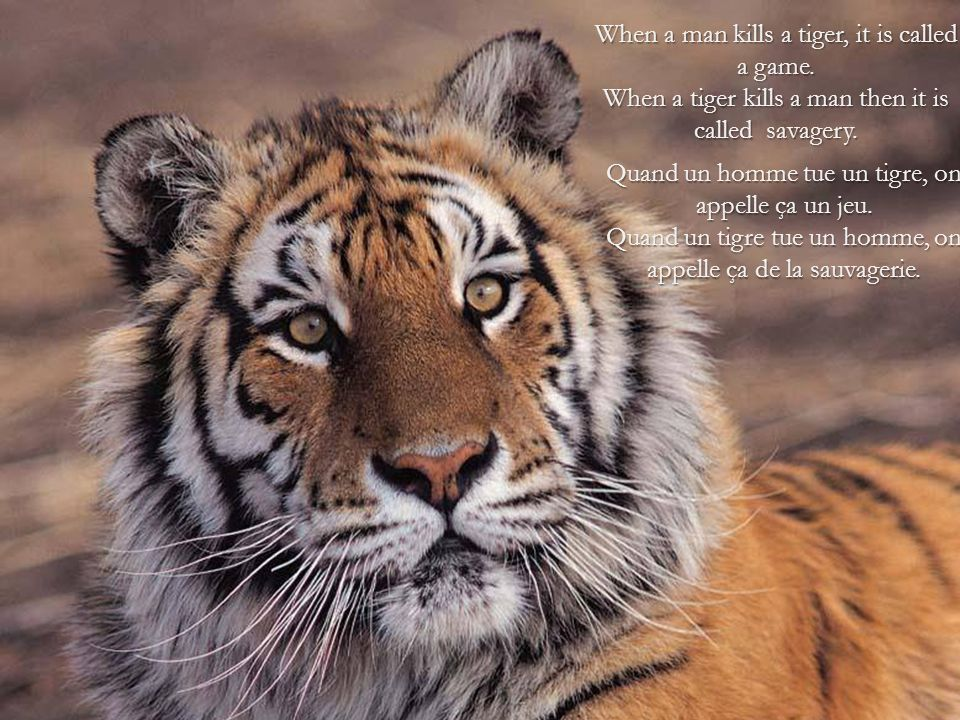 When a man kills a tiger, it is called a game
