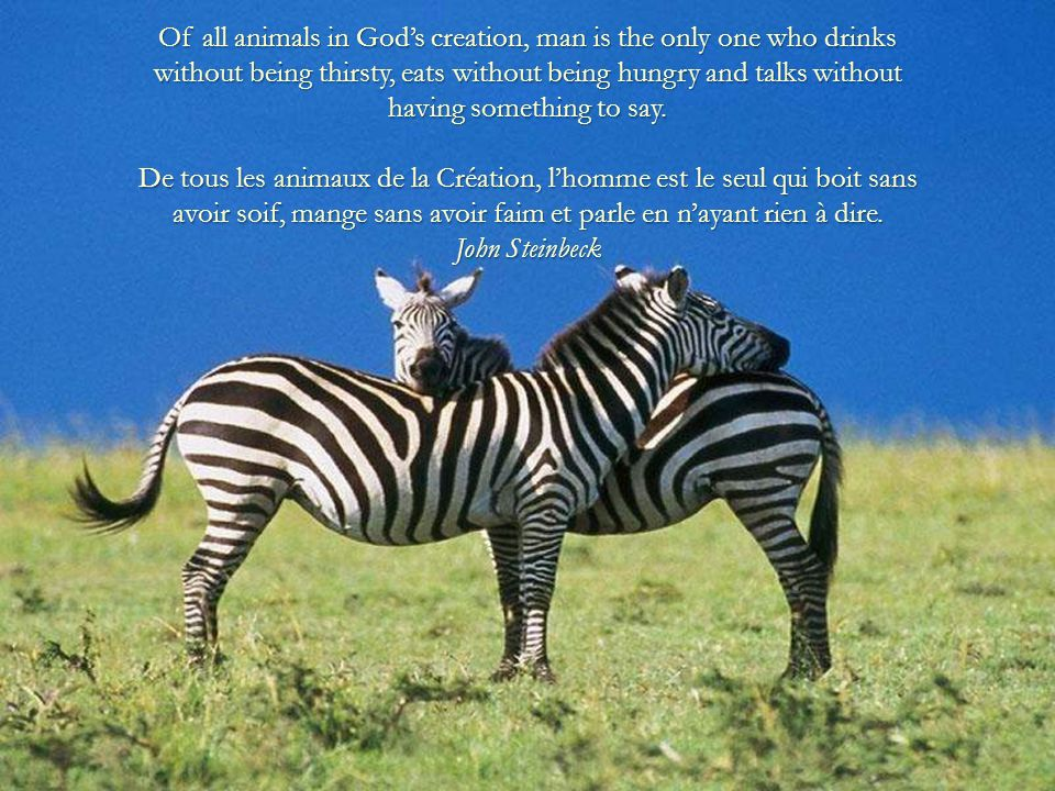 Of all animals in God's creation, man is the only one who drinks without being thirsty, eats without being hungry and talks without having something to say.