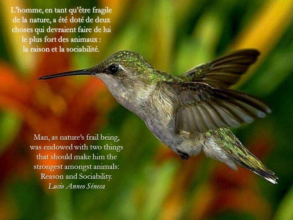 L homme, en tant qu'être fragile de la nature, a été doté de deux choses qui devraient faire de lui le plus fort des animaux : la raison et la sociabilité.