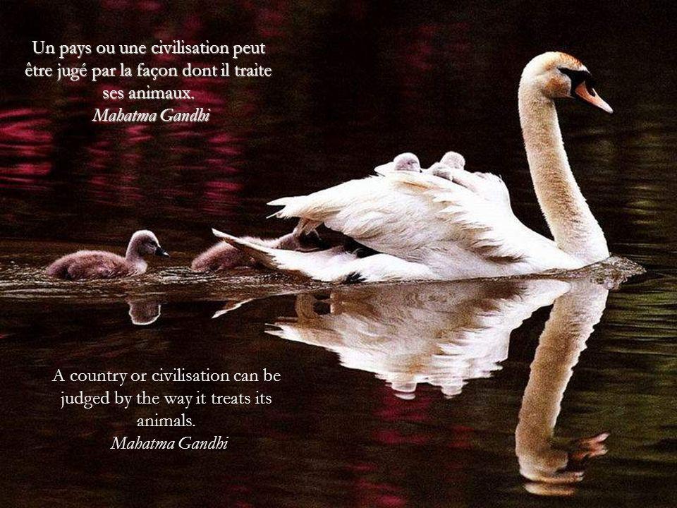 Un pays ou une civilisation peut être jugé par la façon dont il traite ses animaux.