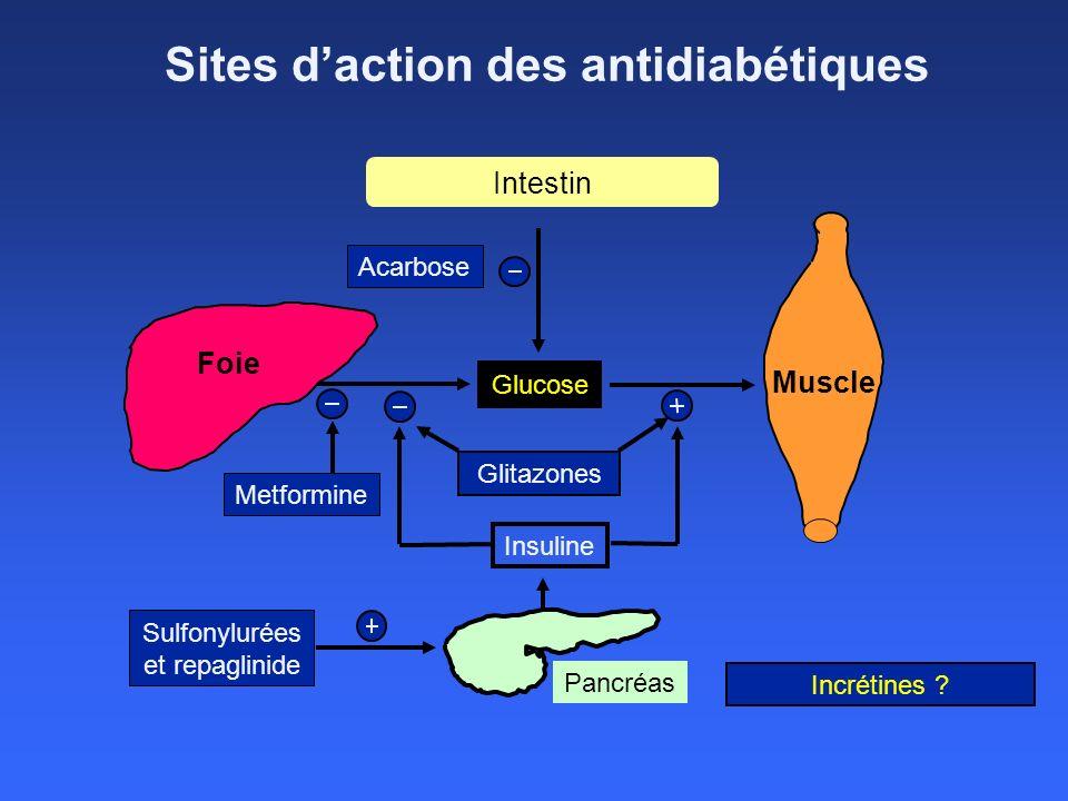 Sites d'action des antidiabétiques