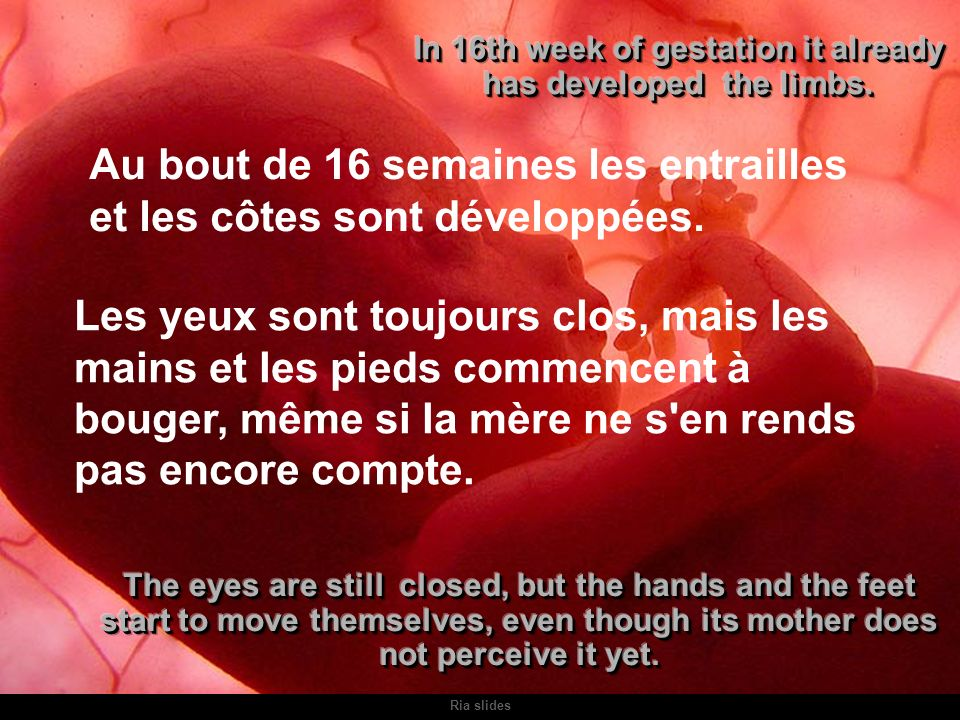 In 16th week of gestation it already has developed the limbs.
