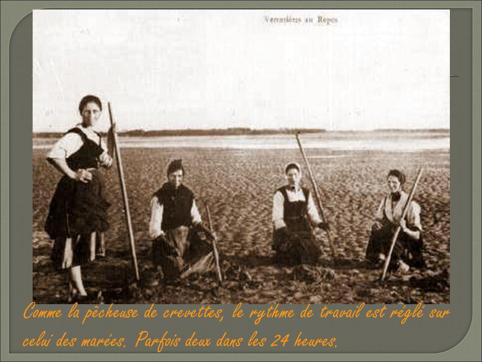 Comme la pêcheuse de crevettes, le rythme de travail est réglé sur celui des marées.