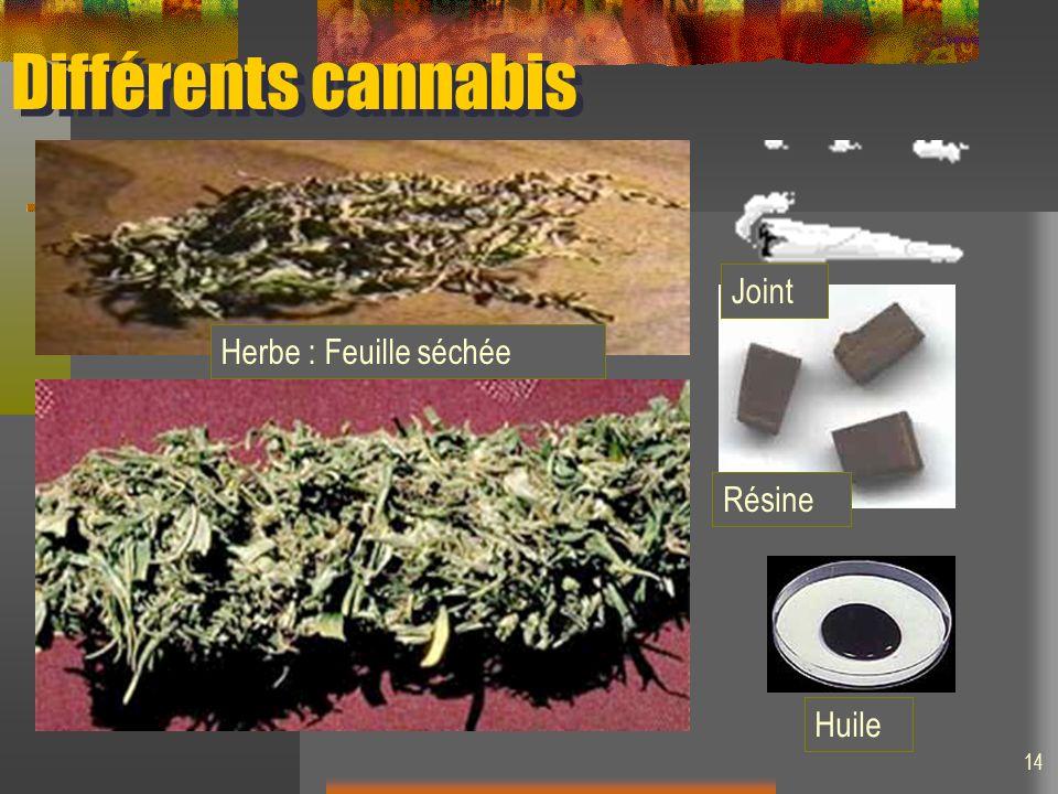 Différents cannabis Joint Herbe : Feuille séchée Résine Huile