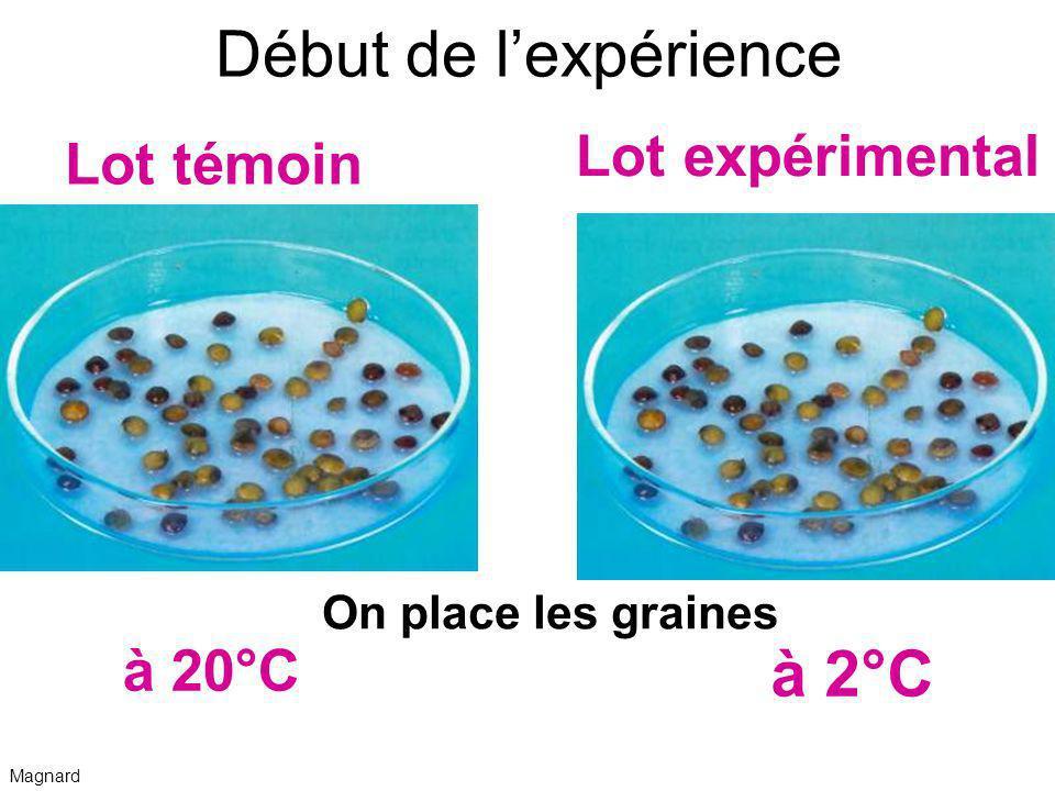 Début de l'expérience à 2°C Lot expérimental Lot témoin à 20°C