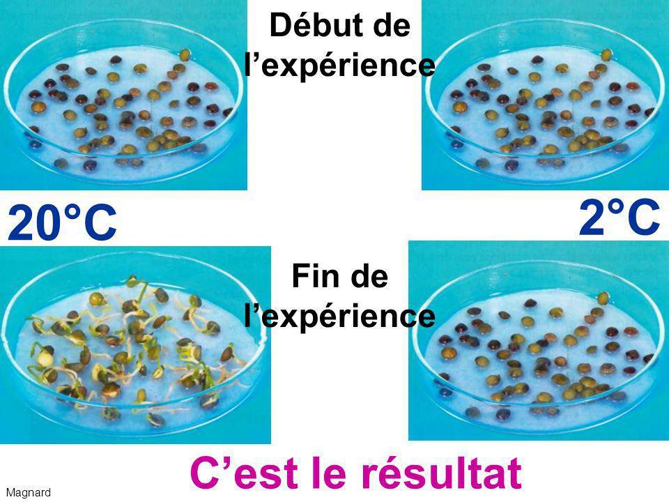 2°C 20°C C'est le résultat Début de l'expérience Fin de l'expérience