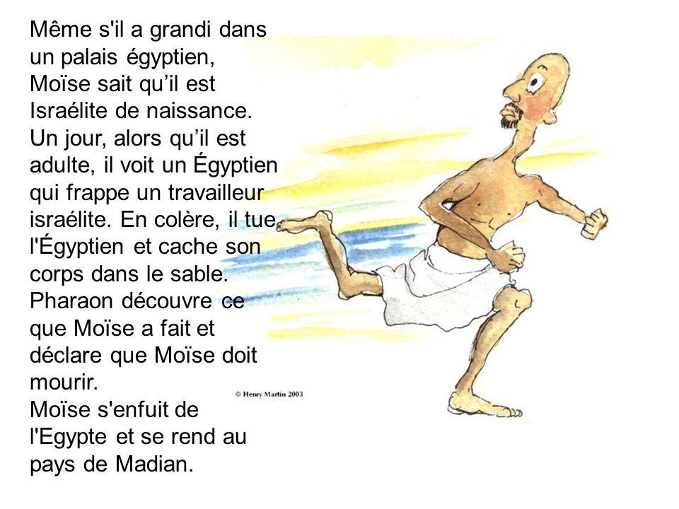 Même s il a grandi dans un palais égyptien, Moïse sait qu'il est Israélite de naissance.