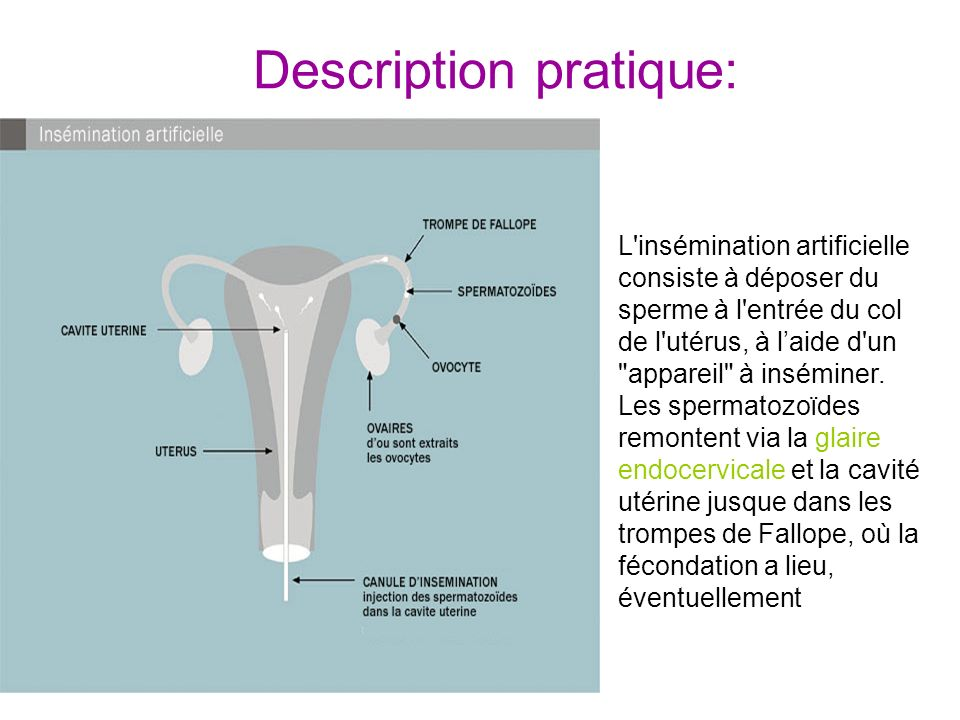 Description pratique: