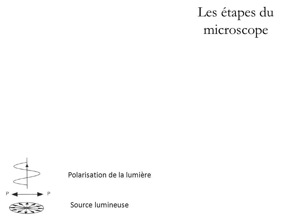 Les étapes du microscope