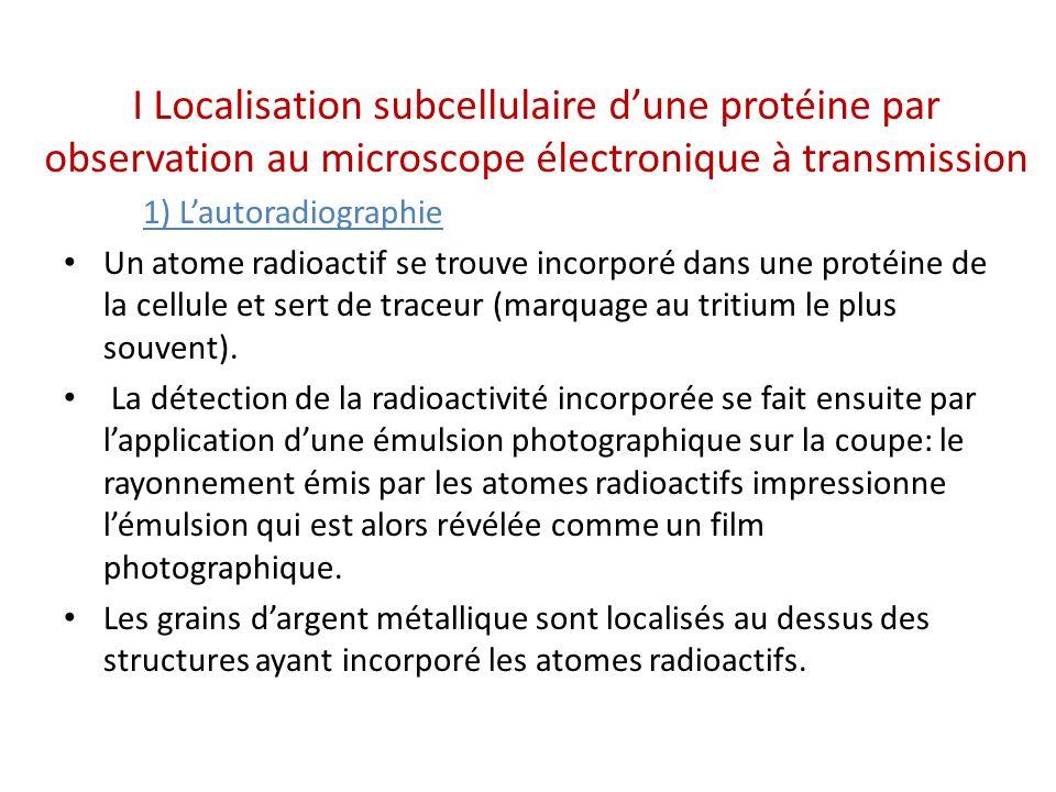 I Localisation subcellulaire d'une protéine par observation au microscope électronique à transmission