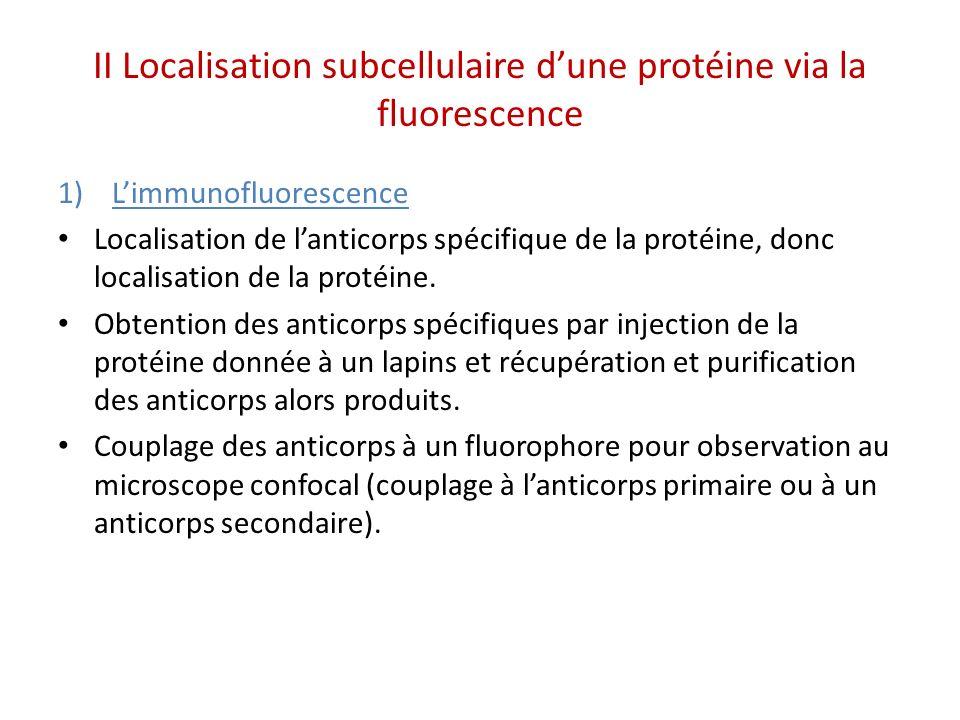 II Localisation subcellulaire d'une protéine via la fluorescence