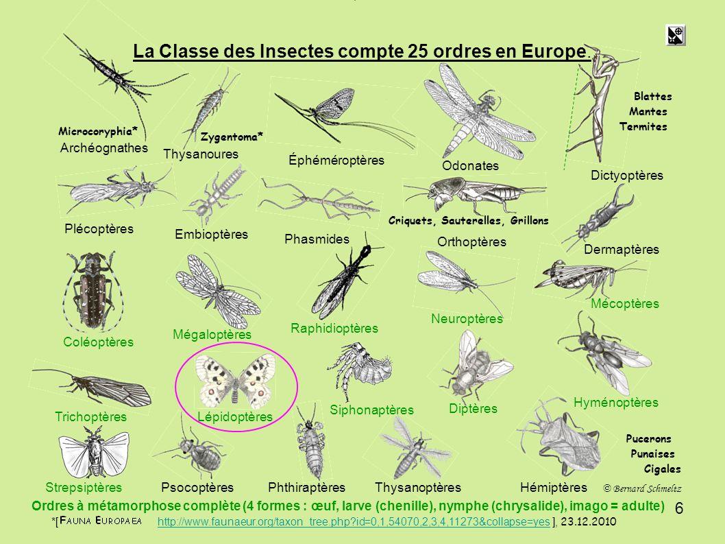 La Classe des Insectes compte 25 ordres en Europe.