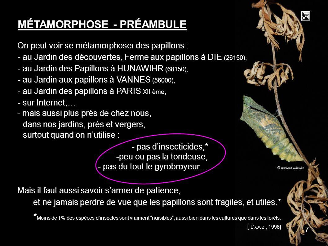 MÉTAMORPHOSE - PRÉAMBULE