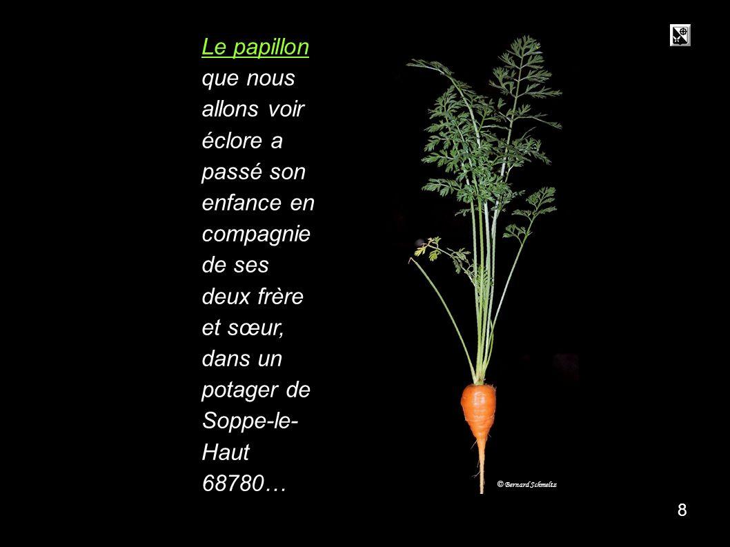 carotte carotte.