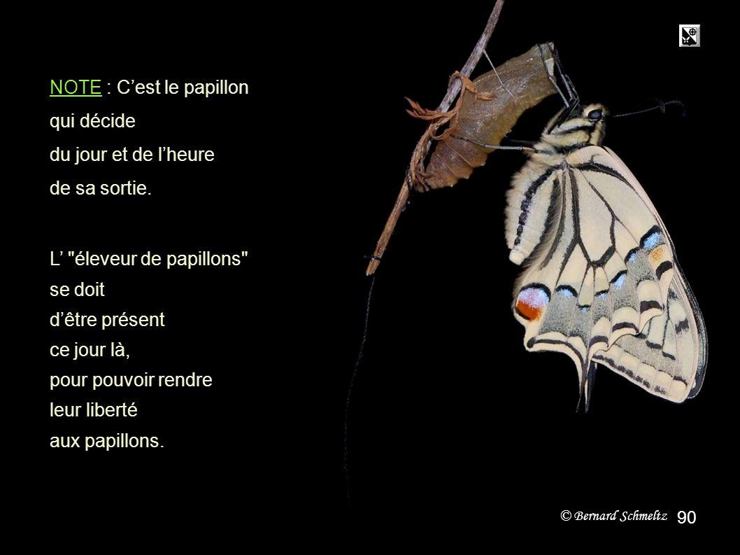fin NOTE : C'est le papillon qui décide du jour et de l'heure