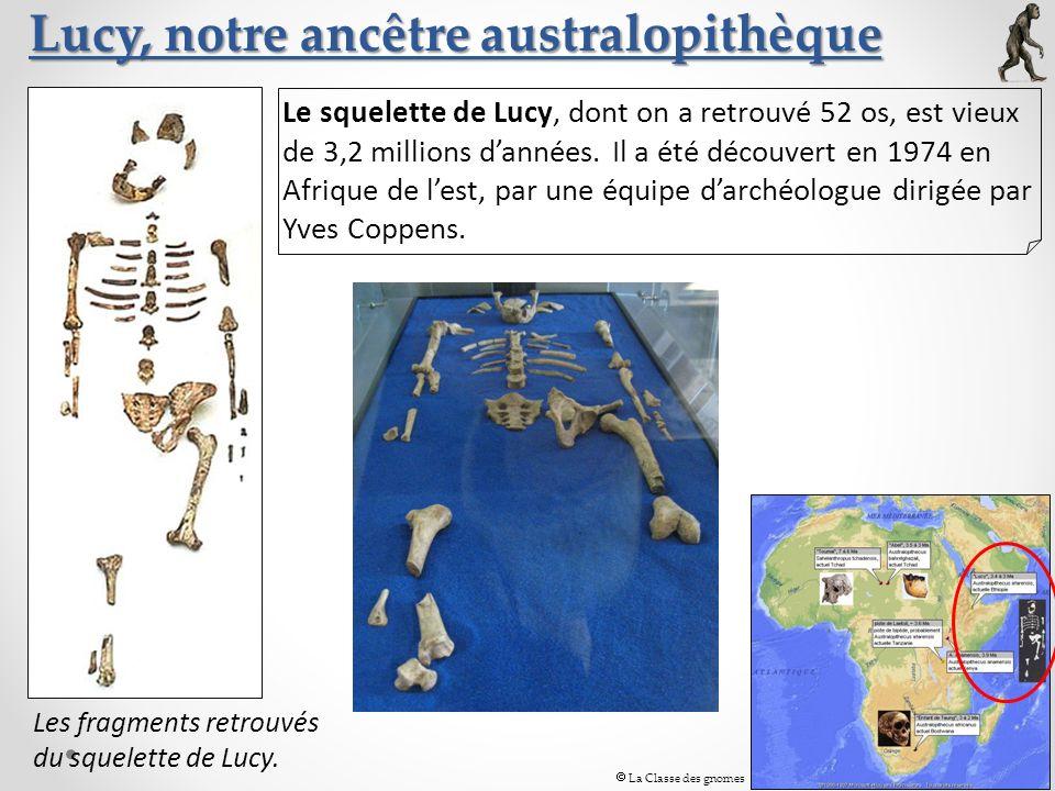 Lucy, notre ancêtre australopithèque