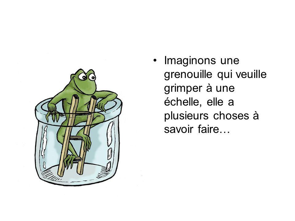 Imaginons une grenouille qui veuille grimper à une échelle, elle a plusieurs choses à savoir faire…