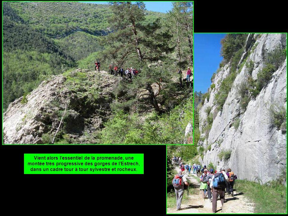 Vient alors l'essentiel de la promenade, une montée très progressive des gorges de l'Estrech, dans un cadre tour à tour sylvestre et rocheux.