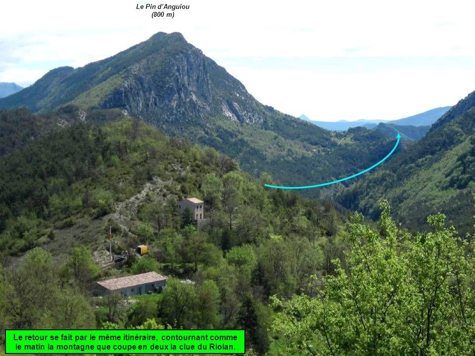 Le Pin d'Anguiou (800 m) Le retour se fait par le même itinéraire, contournant comme le matin la montagne que coupe en deux la clue du Riolan.