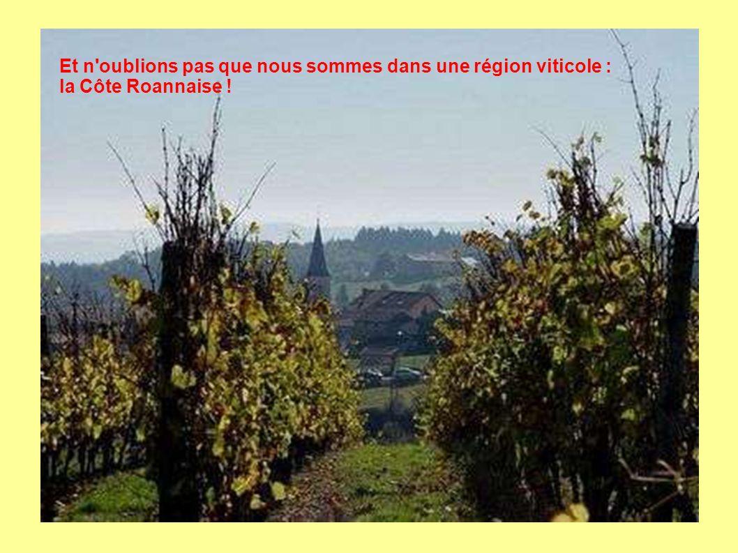 Et n oublions pas que nous sommes dans une région viticole : la Côte Roannaise !
