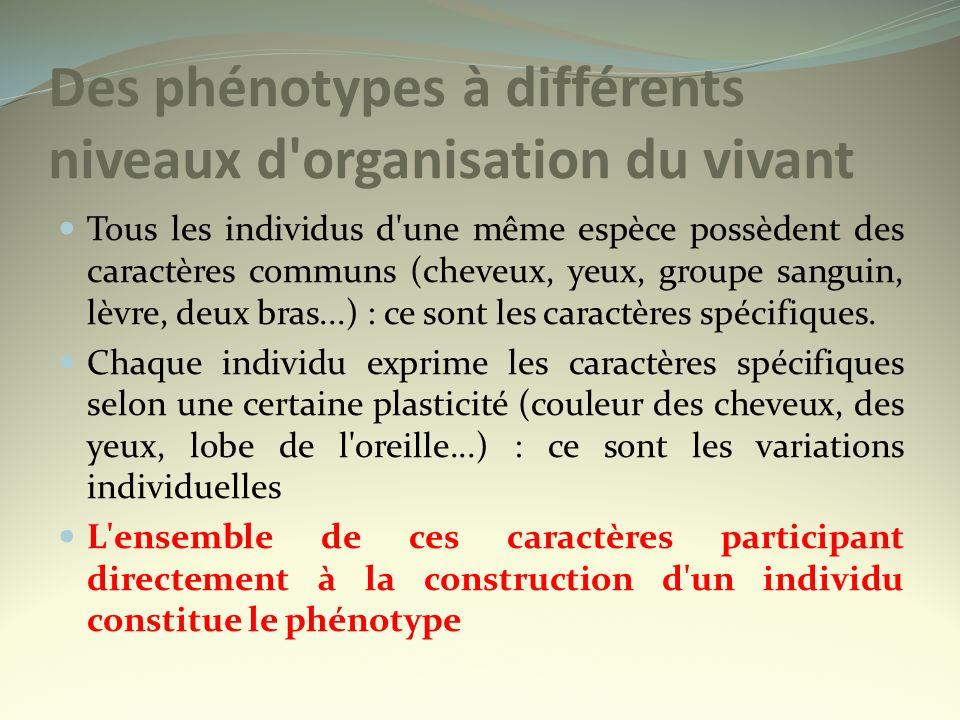 Des phénotypes à différents niveaux d organisation du vivant