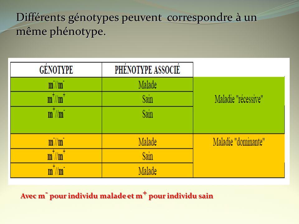Différents génotypes peuvent correspondre à un même phénotype.