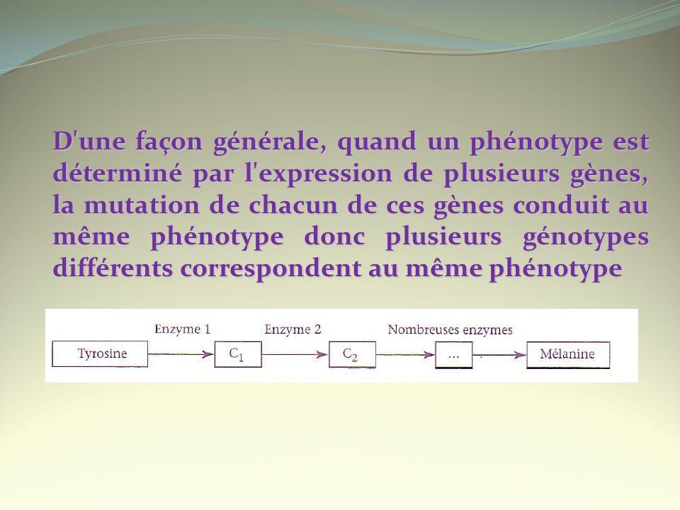 D une façon générale, quand un phénotype est déterminé par l expression de plusieurs gènes, la mutation de chacun de ces gènes conduit au même phénotype donc plusieurs génotypes différents correspondent au même phénotype