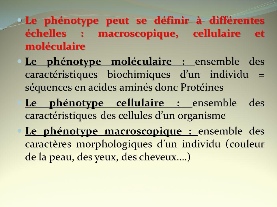 Le phénotype peut se définir à différentes échelles : macroscopique, cellulaire et moléculaire