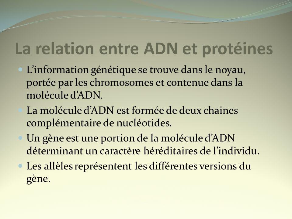 La relation entre ADN et protéines
