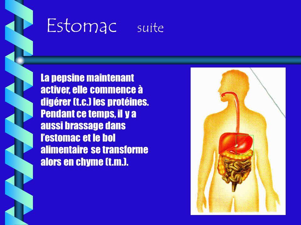 Estomac suite
