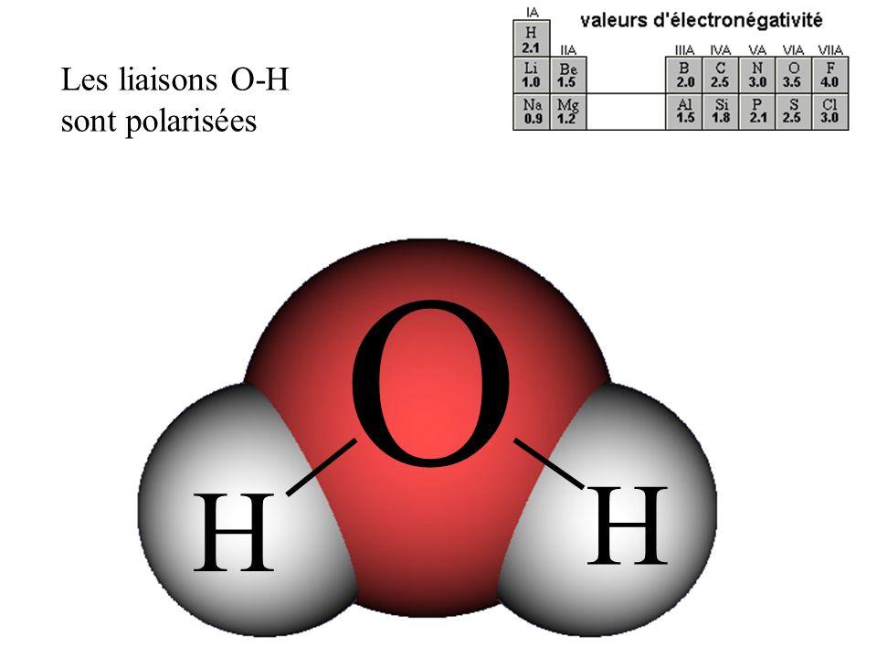 Les liaisons O-H sont polarisées