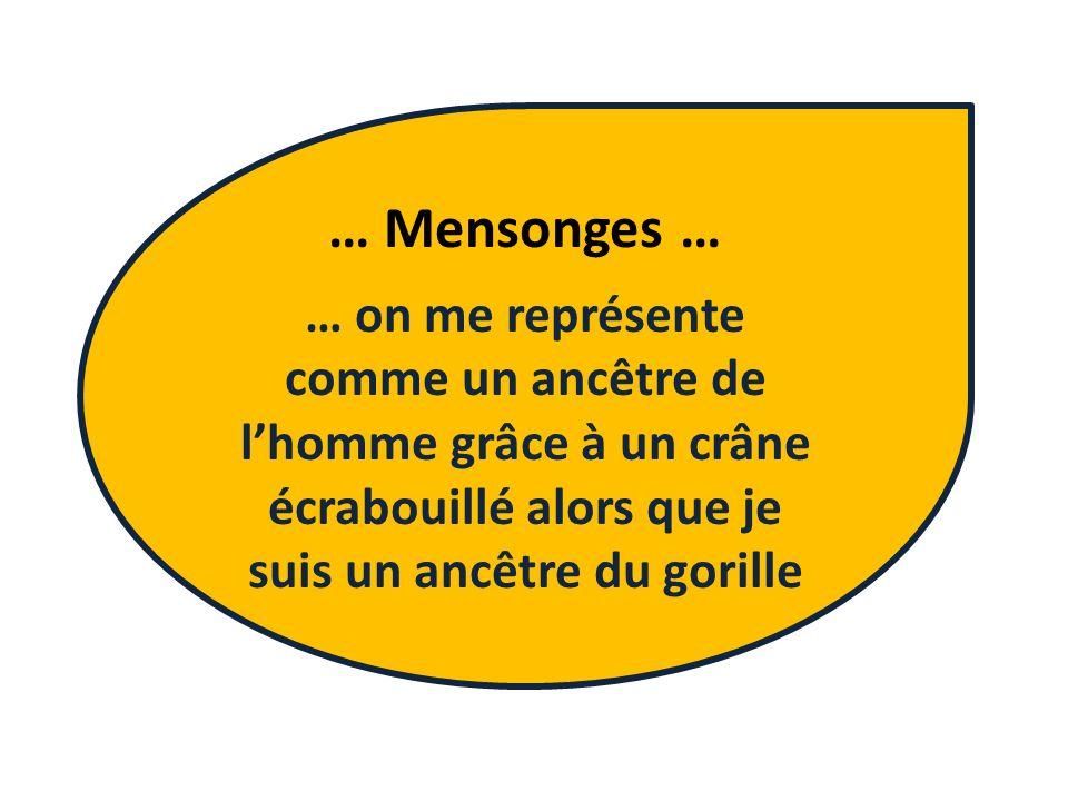 … Mensonges … … on me représente comme un ancêtre de l'homme grâce à un crâne écrabouillé alors que je suis un ancêtre du gorille.