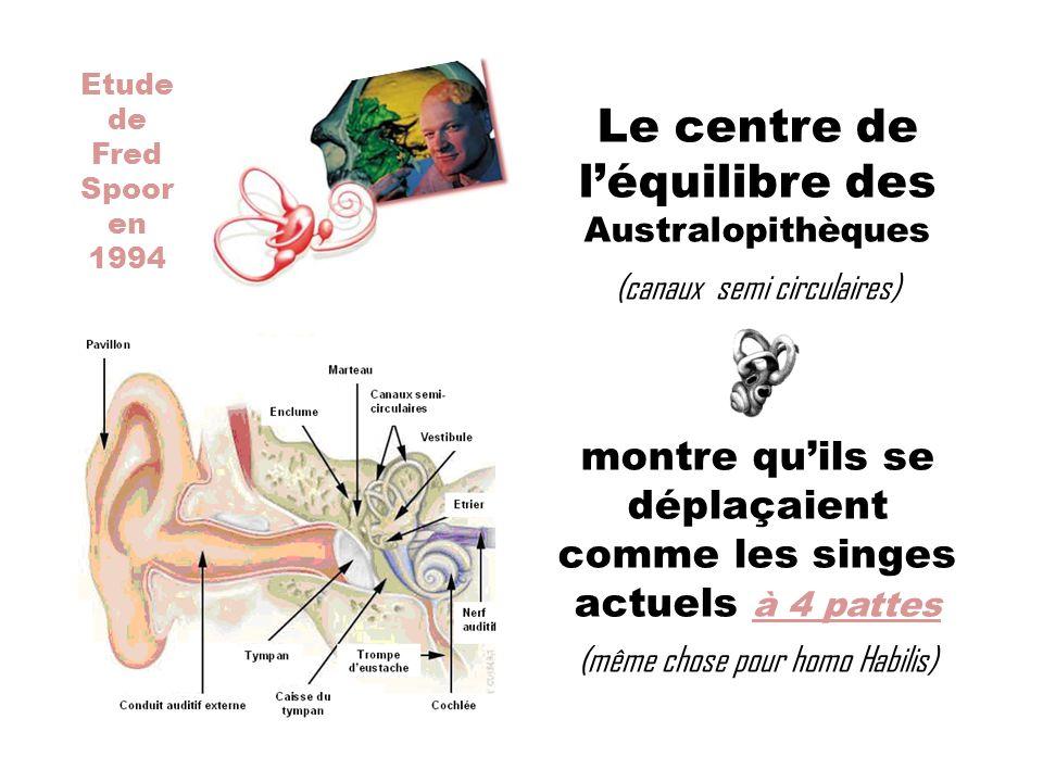 Le centre de l'équilibre des Australopithèques