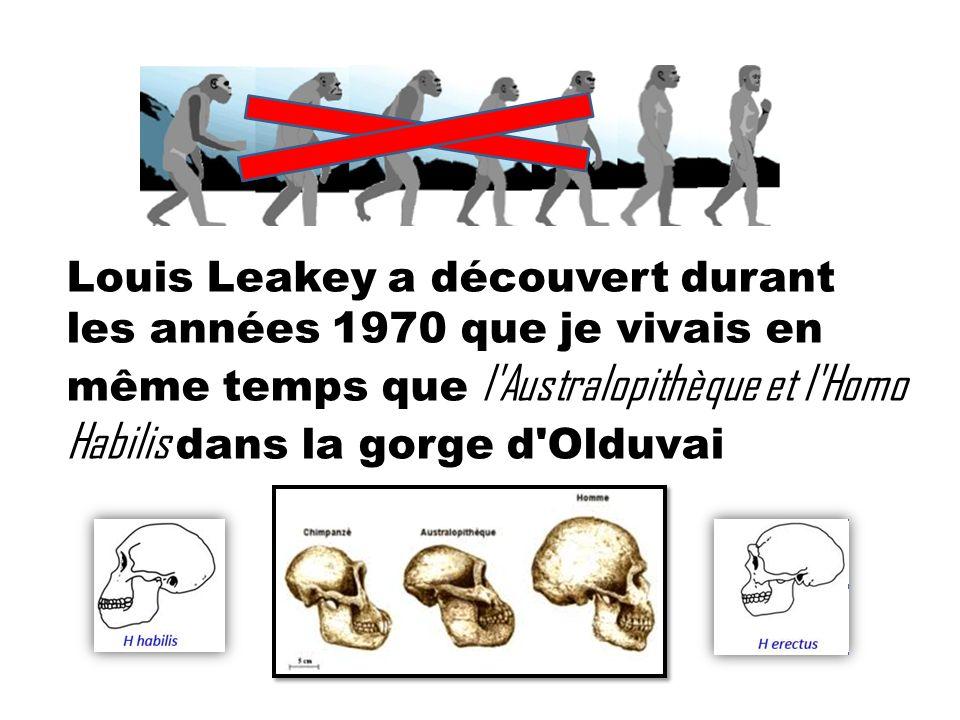 Louis Leakey a découvert durant les années 1970 que je vivais en même temps que l Australopithèque et l Homo Habilis dans la gorge d Olduvai