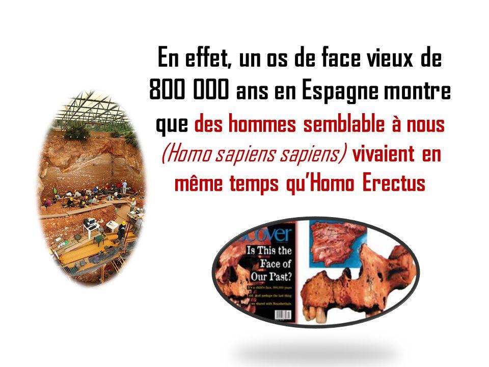 En effet, un os de face vieux de 800 000 ans en Espagne montre que des hommes semblable à nous (Homo sapiens sapiens) vivaient en même temps qu'Homo Erectus