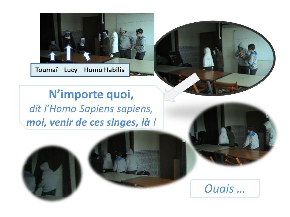 Toumaï Lucy Homo Habilis